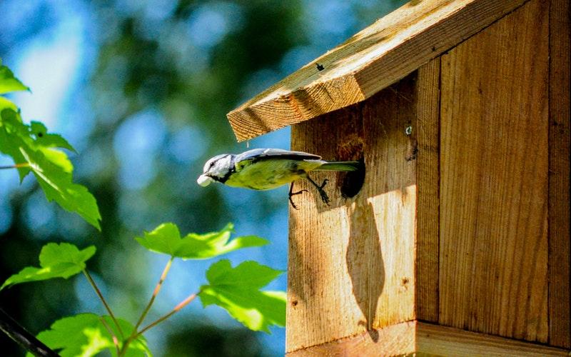 cabane à oiseaux